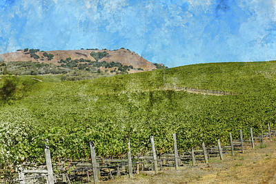 Photograph - Napa Valley Vineyard by Brandon Bourdages