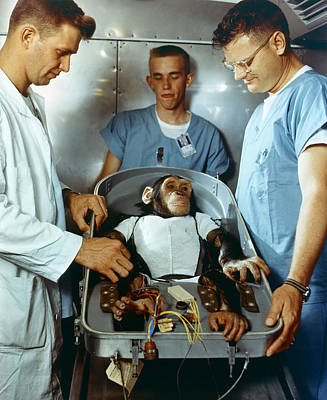 Photograph - Nasa Chimpanzee, 1961 by Granger