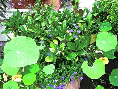 Photograph - Nasturtiums by Stephanie Moore