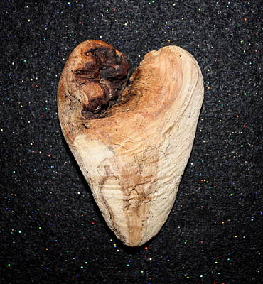 Photograph - Natural Driftwood Heart #6 by Larry Bacon