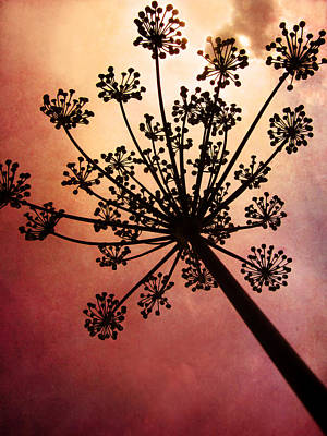 Nature's Fireworks Art Print