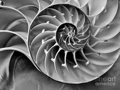 Nautilus Photograph - Nautilus Bw by MingTa Li