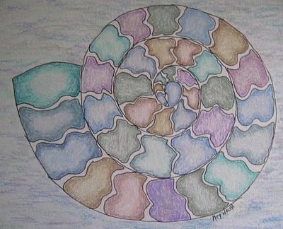 Drawing - Nautilus by Megan Walsh