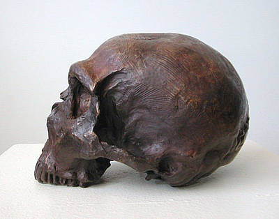 Sculpture - Neanderthal Skull by John Gibbs