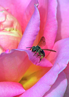 Photograph - Nectar Time by Larry Bishop