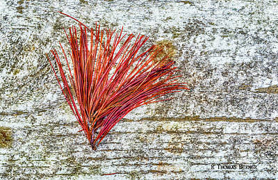 Photograph - Needles by R Thomas Berner