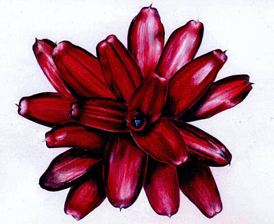 Neoregelia Painting - Neoregelia 'christmas Cheer' by Penrith Goff