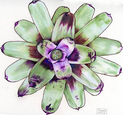 Neoregelia Painting - Neoregelia 'painted Delight' by Penrith Goff
