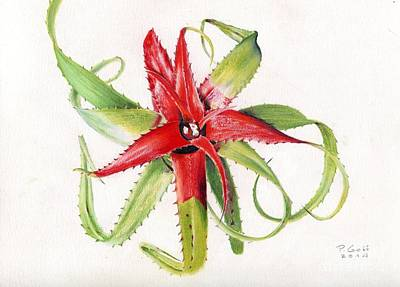 Painting - Neoregelia Pendula by Penrith Goff