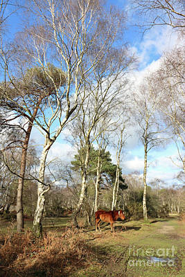 Photograph - New Forest Pony Hampshire England Uk by Julia Gavin