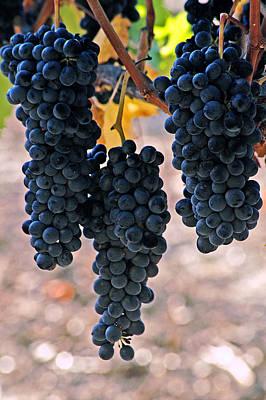 New Grapes Art Print