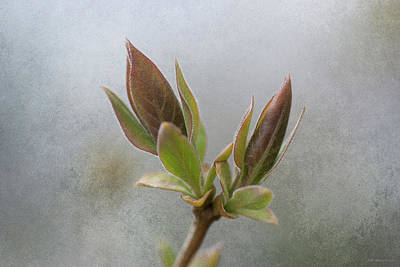 Photograph - New Growth by WB Johnston