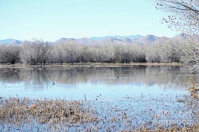 New Mexico Bosque Del Apache Lake Trees Art Print by Andrea Hazel Ihlefeld
