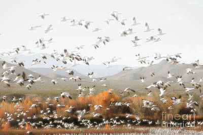 New Mexico Bosque Del Apache Snow Geese Mountain Landscape Art Print by Andrea Hazel Ihlefeld