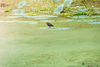 Photograph - Night Heron by Teresa Blanton