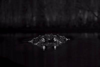 Beauty Mark Photograph - Night Hunter by Mark Andrew Thomas