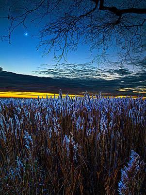 Fall Leaves Photograph - Night Light by Phil Koch