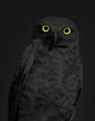 Dark Photograph - Night Stare by Shane Bechler