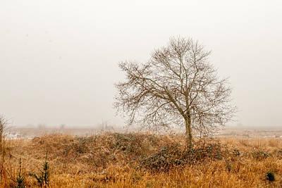 Christina Miller Photograph - Nisqually Wildlife Refuge by Christina Miller