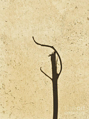 Photograph - Noon Shadow by Fei A