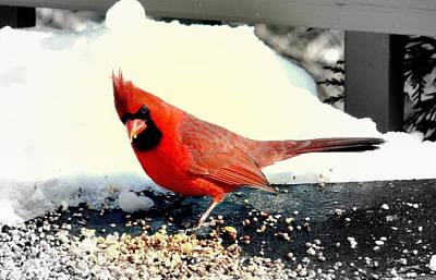 Northern Cardinal Original