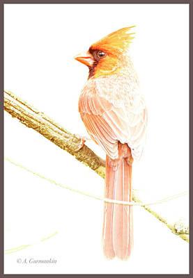 Photograph - Northern Cardinal, Male In Winter by A Gurmankin