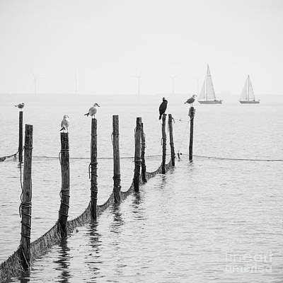 Markermeer Photograph - Northern Sea Landscape by Dvoevnore Photo