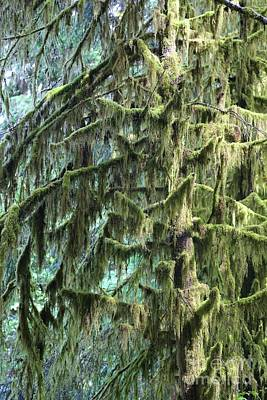 Photograph - Northwest Mossy Tree by Carol Groenen