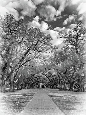 Oak Alley 7  Art Print
