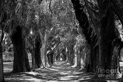 Oak Alley St Simons Island Georgia Art Print by Reid Callaway
