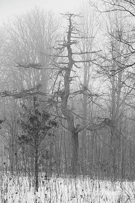 Photograph - Oak In Fog by David Bearden