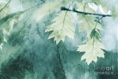 Photograph - Oak Leaves by Dariusz Gudowicz