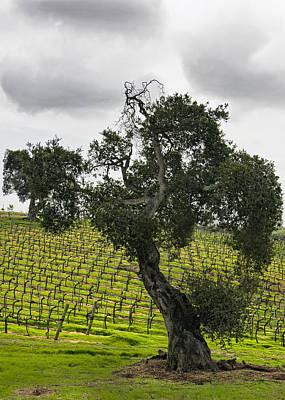 Vineyard Digital Art - Oaks N Vines by Patricia Stalter