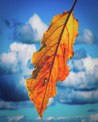 Photograph - October Leaf B Fine Art by Jacek Wojnarowski