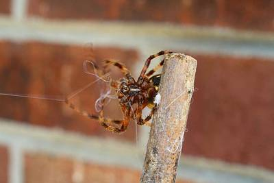 Photograph - October Spider by Kathryn Meyer