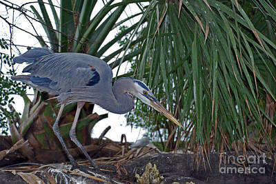 Of Birds Photograph - Old Blue by Skip Willits