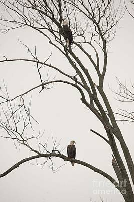 Photograph - Old Friends - Winter Companions by David Bearden