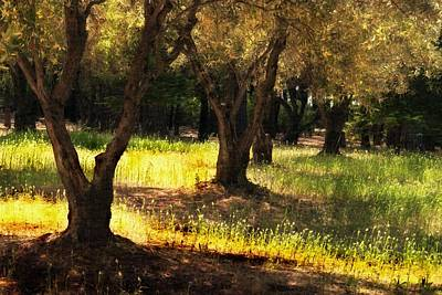 Photograph - Old Olive Grove by Frank Wilson