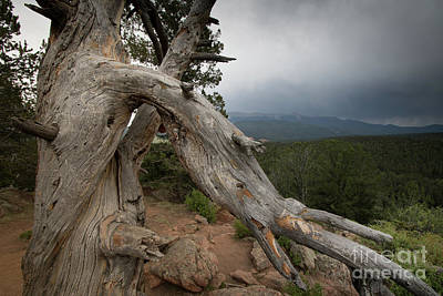 Old Tree On The Mountain Art Print