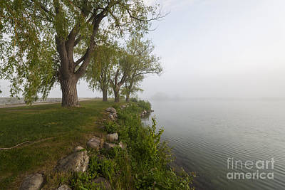 Old Trees On Foggy Shore Print by Elena Elisseeva