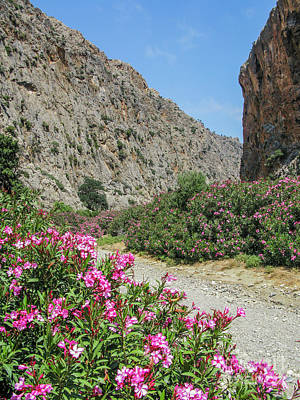 Photograph - Oleander In Cretan Canyon  by Patricia Hofmeester