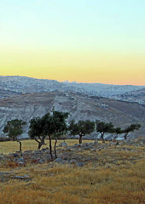 Photograph - Olive Trees by Munir Alawi