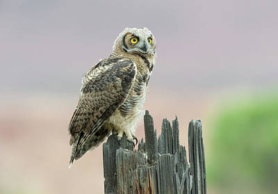 Photograph - On Alert by Scott Warner