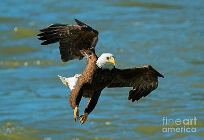Talons Photograph - On Approach by Mike Dawson
