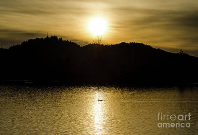 Photograph - On Golden Pond by Nick Boren