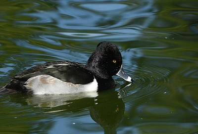 Photograph - On The Pond by Fraida Gutovich