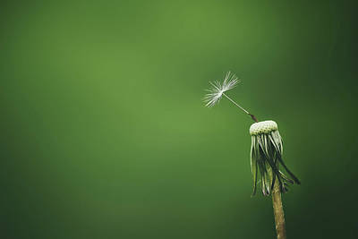 Photograph - One by Bess Hamiti