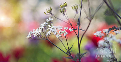 Cow Parsley Wall Art - Photograph - One Spring Morning by Tim Gainey