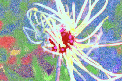 Photograph - Onion Top by Shirley Moravec
