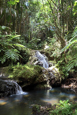 Photograph - Onomea Waterfalls by Susan Rissi Tregoning